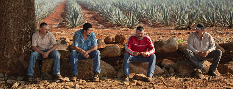 Workers resting in Jalisco agave fields at El Tesoro's La Alteña Distillery