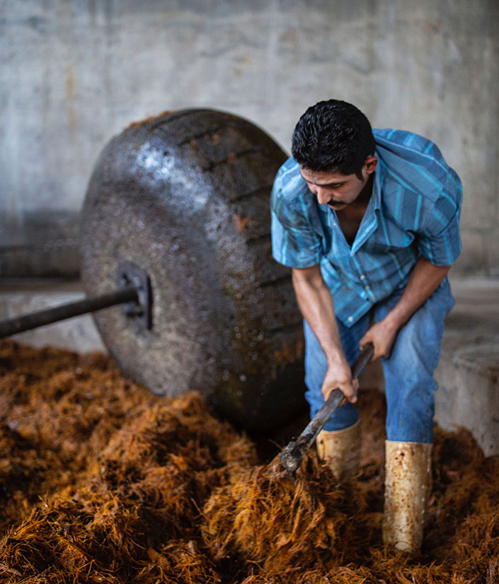 Distillery worker raking crushed agave fibers at El Tesoro's La Alteña Distillery
